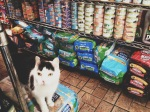 Bodega Kitty